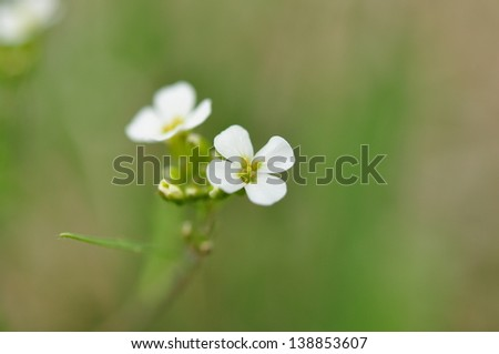 Four White Petals Flower Stock Photo Edit Now 138853607 Shutterstock