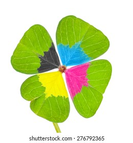 Four-leaf clover with CMYK colors, special breeding of four-leaf clover