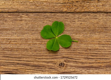 Four-leaf clover, fresh plant on vintage wooden boards. Good luck symbol, St.Patrick's Day concept. Old background