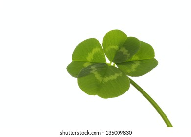 Four-leaf clover of the good luck
