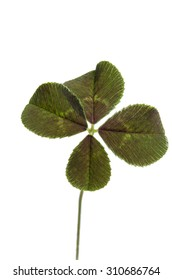 four-leaf clover for good luck isolated on white background