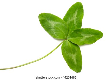 Four-leaf clover isolated on white background