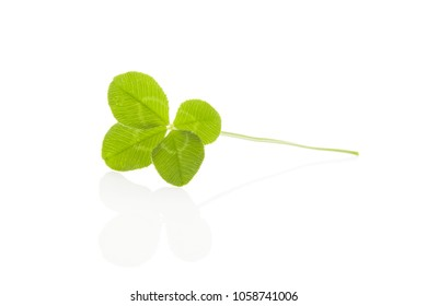 Four-leaf clover. Lucky herb isolated on white background .