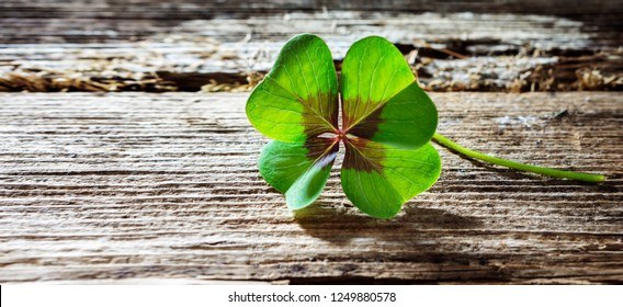 Four-leaf clover on wood with copy space, banner