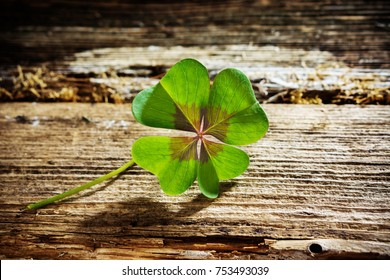 Four-leaf clover on wood with copy space