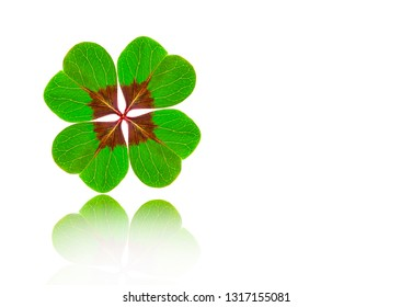 Four-Leaved Green Cloverleaf