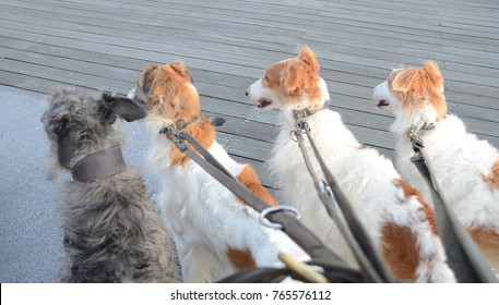 Foursome of dogs pay attention to something outside the picture rame.