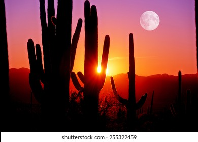 Fourth Sunset at Saguaro National Park near Tucson Arizona.