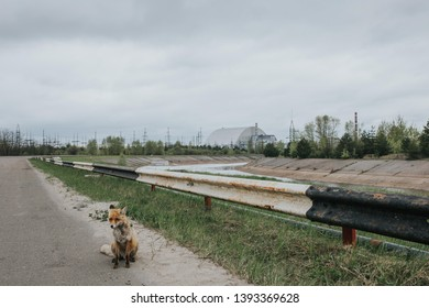 Fox and Chernobyl NPP. Chernobyl.