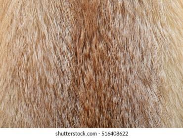 Fox fur.