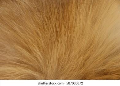 Fox fur background