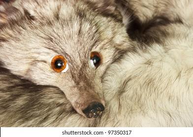 Fox shawl with fake eyes