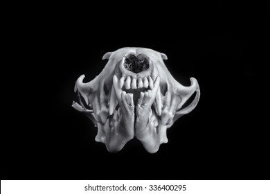 Fox skull on a beautiful black background making the image pop.