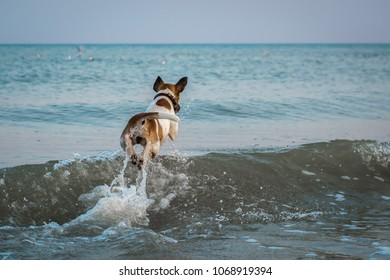 fox terrier dog jumping through the waves in the sea