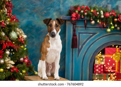 Fox terrier near a fireplace and gift boxes