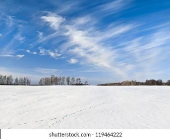 Fox trace on snowy field under windy sky