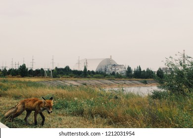 Fox walking infront of the chernobyl nuclear reactor