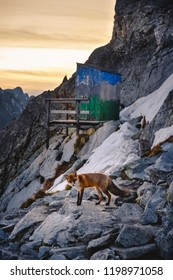 Fox in winter mountain at sunset in unique please at Hight Tatra mountain, the most altitude toilet near house under Rysy. Image with high iso and grain