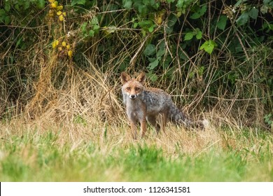Fox in the woods - Fabulous Outdoors