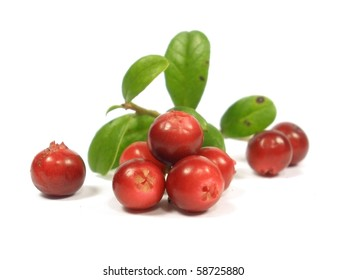 fox-berry with leaves on the white isolate background