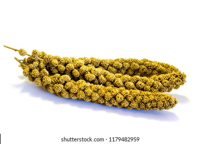 Foxtail millet birdseed isolated on white background