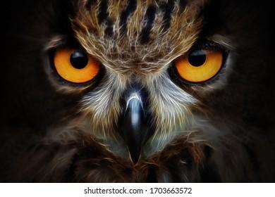Fractals background owl portrait animal