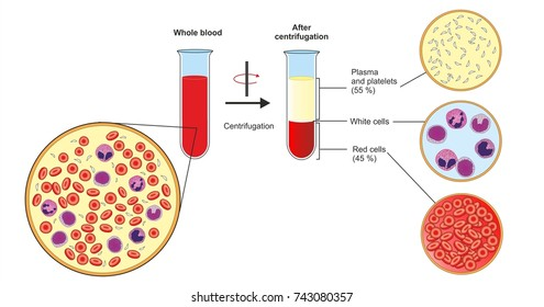 Fractionating or separating whole blood by centrifuging the resulting components are plasma with platelets, a layer of leukocytes  or buffy coat and erythrocytes at the bottom of the tube.