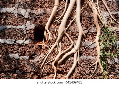 Fragment of the ancient Fort. Abstract roots closeup.