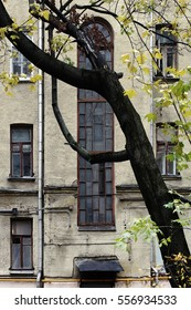 A fragment of a facade of an old city house with a bizarre-shaped tree on the foreground. Russia, Moscow, October 2016.