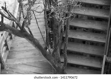 Fragment of growing up tree on the going down wooden stairs as a background.
