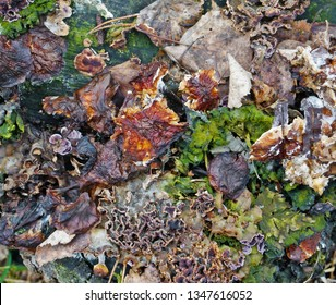 Fragment of natural forest ground cover with moss, cones, mushrooms and other natural objects.