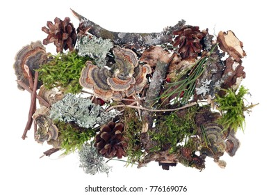 Fragment of natural forest ground cover with moss, cones and other natural objects.  Isolated ion white studio shot