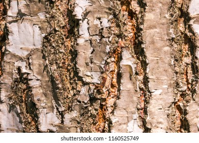 Fragment of rough coarse aged tree bark with cracks. Abstract natural texture background