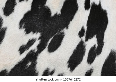 A fragment of a skin of a cow close up on a background photo.