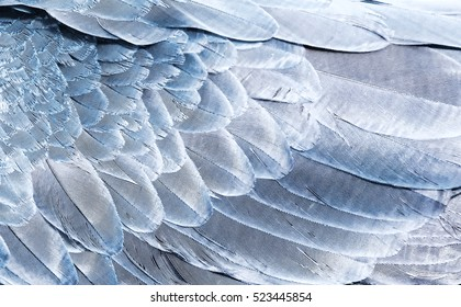 Fragment of wings bird in silver color for background. Texture of feathers.