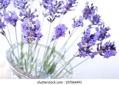 Fragrant bouquet of lavender flowers in glass vase