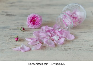 A fragrant, delicate, edible tea rose for a pink jam or jam from rose petals, gultbesheker in Turkish and Ossetian cuisines, a gourmet delicacy, a beautiful flower