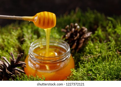 Fragrant fragrant honey in a glass jar standing on the forest moss.