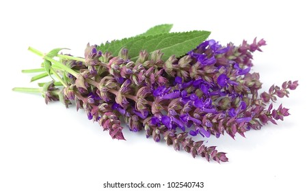 fragrant sage flowers on a white background