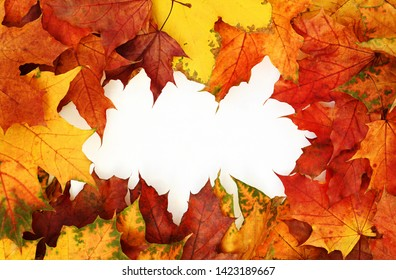 Frame with autumn colorful leaves on white background. Top view. Flat lay.
