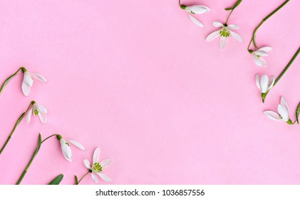 Frame of beautiful flowers white snowdrops (Galanthus nivalis) on a pink paper with space for text. Top view, flat lay