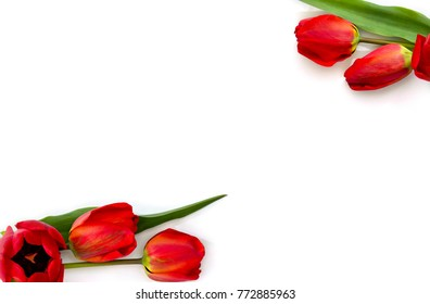 Frame of beautiful red tulips on white background with space for text. Top view, flat lay