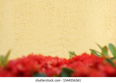 Frame of Beige color background with red flower foreground.
