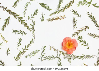 Frame with branches, leaves and petals isolated on white background. Flat lay, top view. Arrangement of gray grefsheim (spiraea cinerea) plant and orange rose flower.