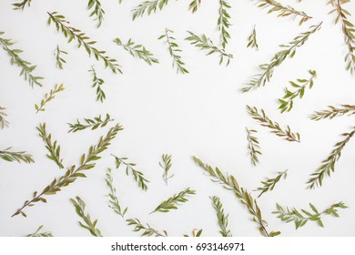 Frame with branches, leaves and petals isolated on white background. Flat lay, top view. Arrangement of gray grefsheim (spiraea cinerea) plant.