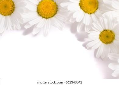 Frame of chamomiles
