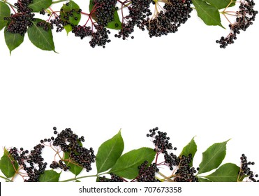 Frame of clusters fruits black elderberry (Sambucus nigra) and leaves on a white background. Common names: elder, black elder, European elder and European black elderberry. Top view, flat lay.