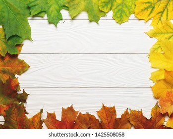 Frame composition with autumn leafs colorful rainbow color gradient on white wood.