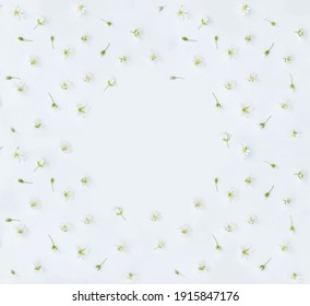 frame with a daisy on a white background