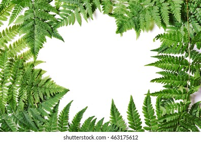 frame of fern with place for text.